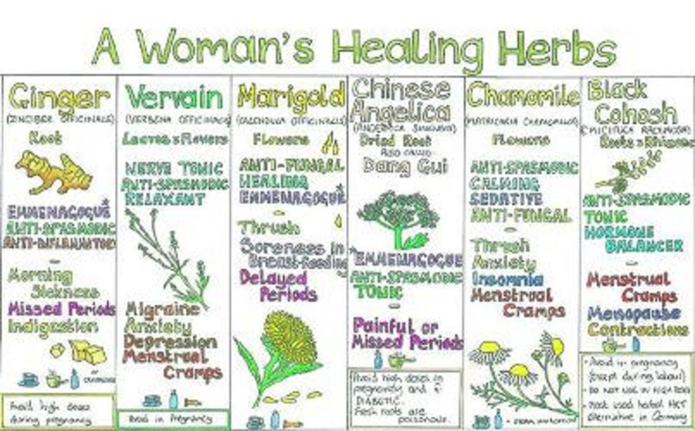 HEALING HERBS FOR WOMEN